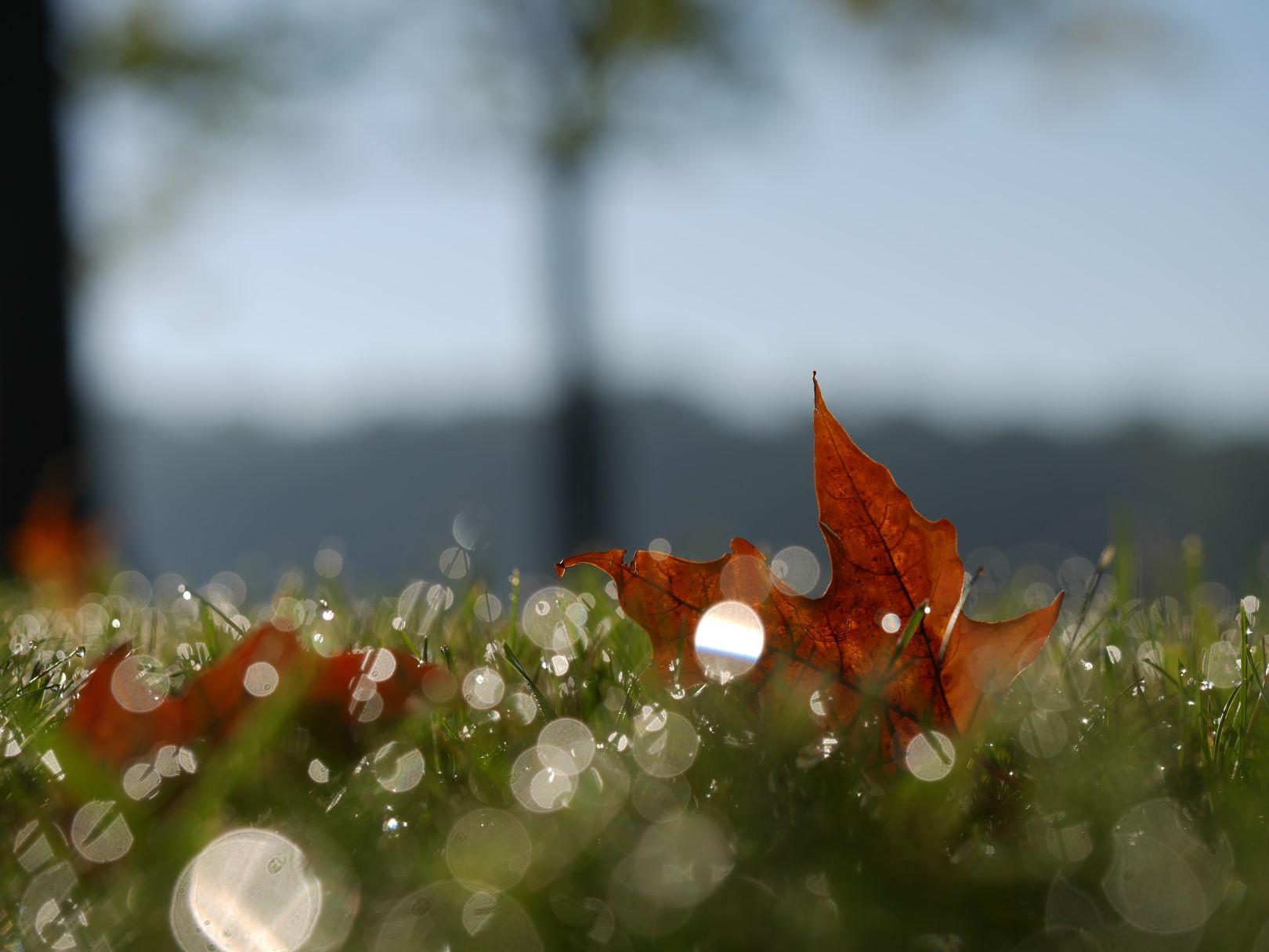otoño naturaleza parar
